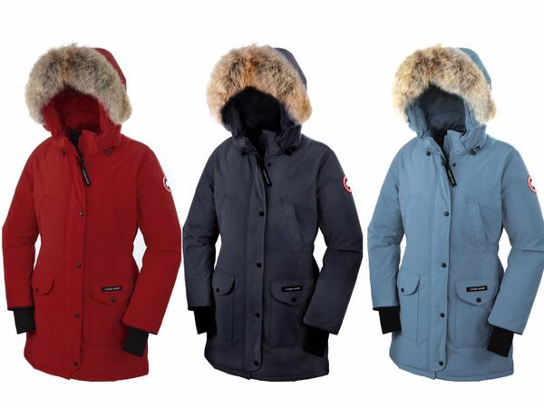 Image result for The Incomparable Canada Goose