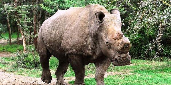 RT @Protect_Wldlife: Please Sign & RT: Tell Kenya To Take Steps to Save The White Rhino From Extinction. http://t.co/ZUpI6U0FSV #Rhino http…