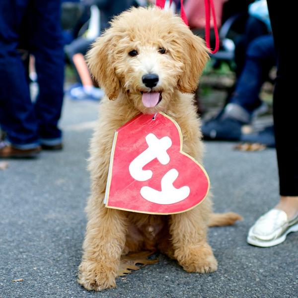 Thefourthvine On Twitter Best Dog Costume Ever Rt Thedogist Hudson Goldendoodle Tompkins Square Park Parade New York