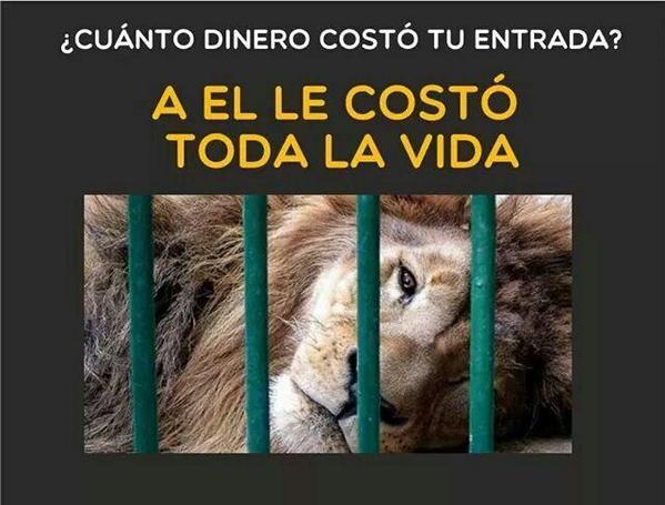Basta de circos con animales. Basta de zoologicos. Los animales tienen que estar en libertad. http://t.co/nzYSSJXRFM