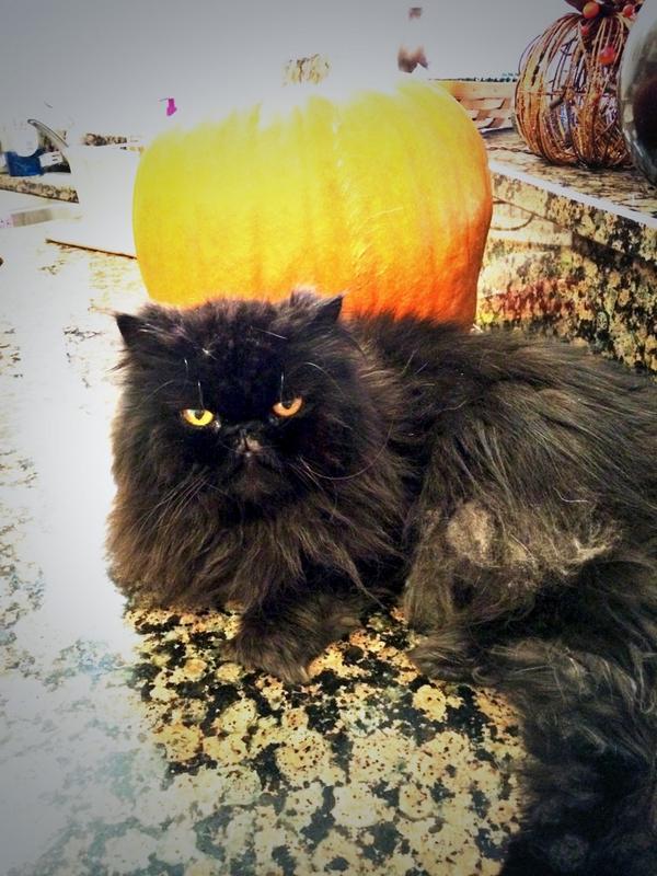 #halloween #BlackCatSelfie http://t.co/m1ox0H8bfa