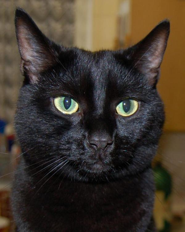 #cpblackcats Here's @MarmiteMC looking rather handsome @CatsProtection http://t.co/XQlqRtjm39