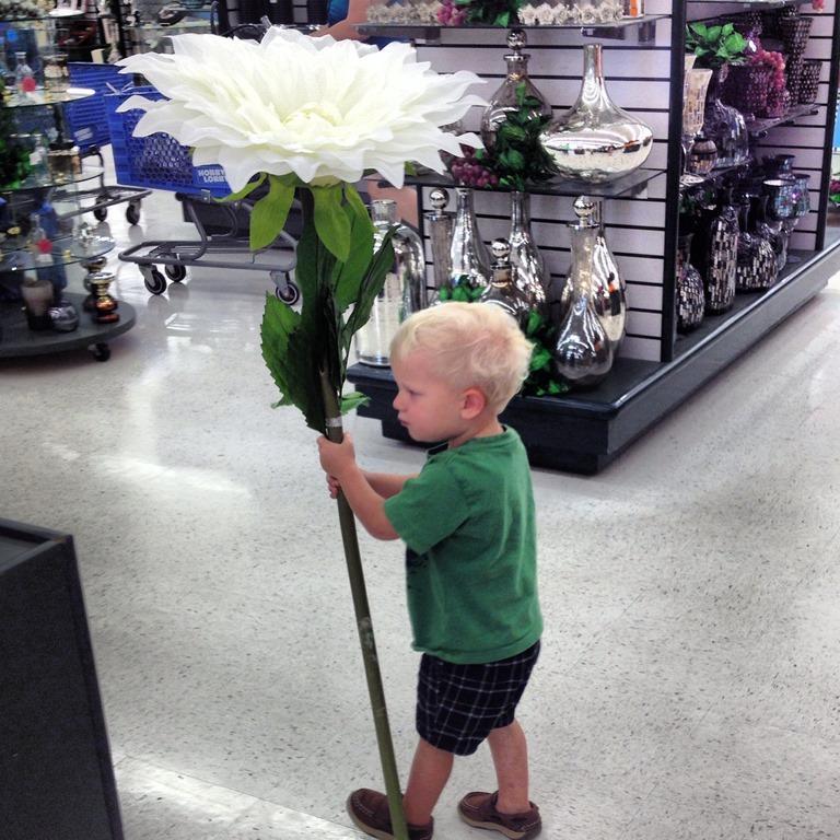 Jennifer Wright On Twitter Billytolley Huge Flowers At Hobby