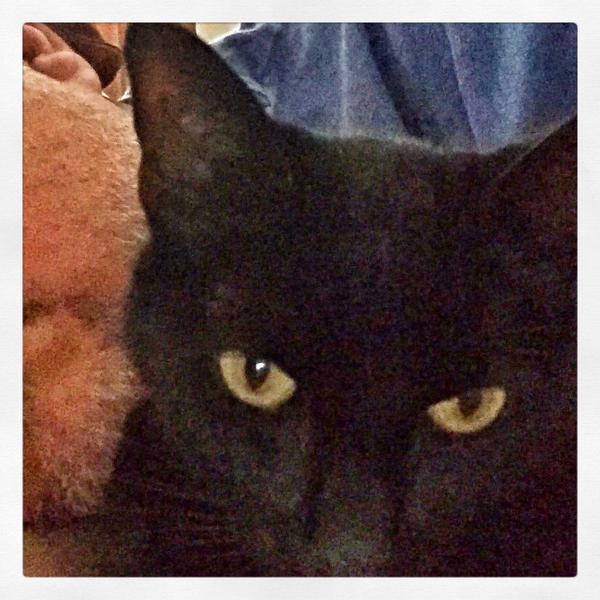 Hooman asweep I takes selfie to show yous I still here! - #picklesthecat #BlackCatSelfie #blackcats #Halloween http://t.co/NOaikHtUZu