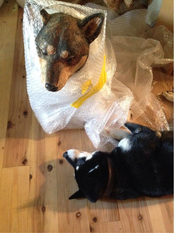 梱包作業中、僕もプチプチで包んで〜と邪魔する犬。 pic.twitter.com/yycISCEk5f