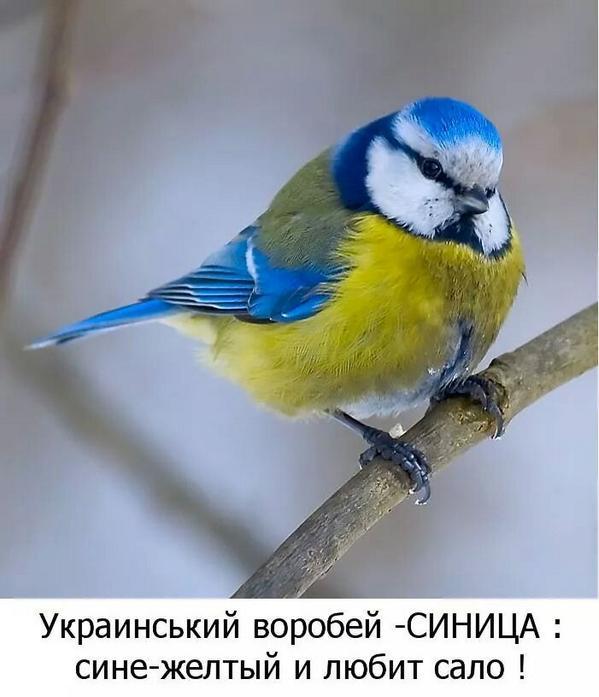 Партии Майдана обязаны создать мощное, проукраинское, патриотическое большинство созидания, - Аваков - Цензор.НЕТ 1357