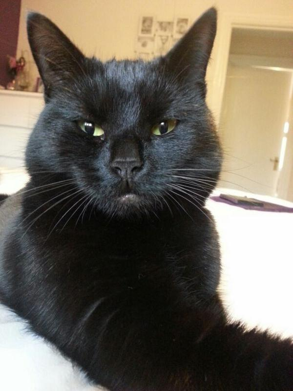 #CPBlackCats here is my little princess Winnie. She was adopted from the Derby branch last year http://t.co/Gu2ntYXFKB