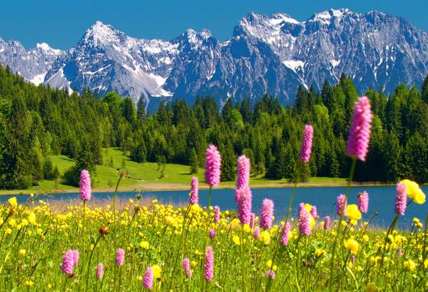 "Free Flowers River Mountain: Beautiful Earth Pics On Twitter: ""#beautiful #nature"