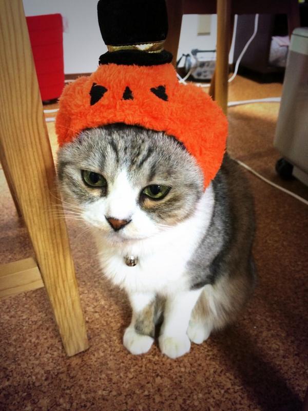 うちのニャンコもハロウィンが待ち遠しい模様。…ちょっとおこ?(´・_・`) pic.twitter.com/85JIAjp0Ki