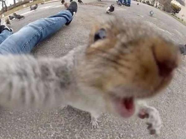 Best selfie EVER! http://t.co/2O49eZoTN3