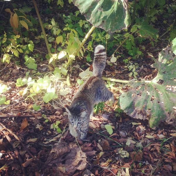 いがくりがいっぱい落っこちている草むらに突っ込んで言っちゃったチィチィ。 (>Д<*)いたいたいたいたっっ! (゚ー゚*)。oO(リスさんしっぽ…)