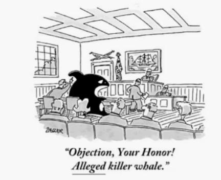 Objection, Your Honor! *Alleged* Killer whale