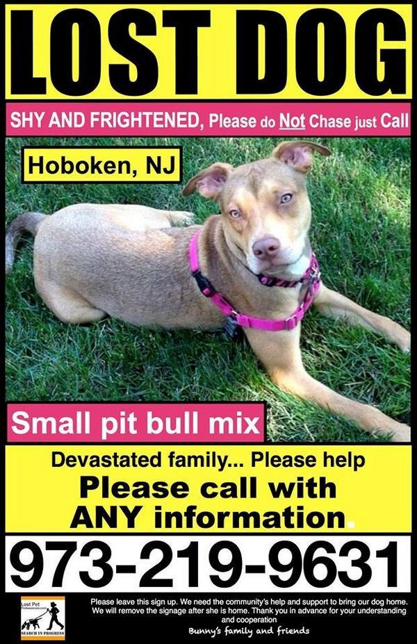 Please keep sharing! Lost in Hoboken NJ. @CarolineManzo @chris_manzo @AlbieManzo @LittleTownNYNJ http://t.co/VqEeILlaOC
