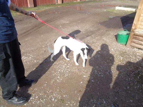 Safie is looking for a rescue placement urgently TIME UP WEDS 22.10.14 http://t.co/M67viCwPmS http://t.co/x1zztNL26G