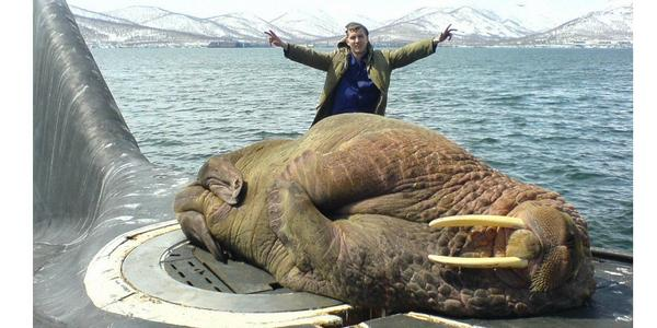 Fantastic image. RT @pickover: A walrus was discovered asleep atop a Russian submarine. http://t.co/ei1ps4VPJG http://t.co/xTgu33XrSz