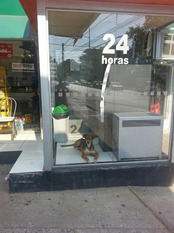 """""""El guardián del cajero"""": este perro buscó resguardarse del intenso calor. La foto se viralizó en las redes. http://t.co/ikKu9jy996"""
