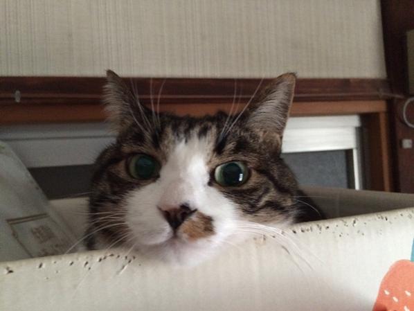 おはようございます(=^..^=)ミャー http://t.co/DUOOCCIzyO