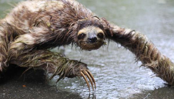 Catrin A Twitter Horror Film Pitch Wet Sloths V Wet Koalas Image Via Elise Andrew Rosemarienorth Http T Co Tpzzqujnr3