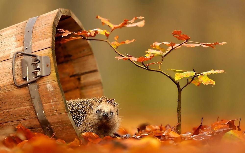 Уборка, смешные картинки на осень