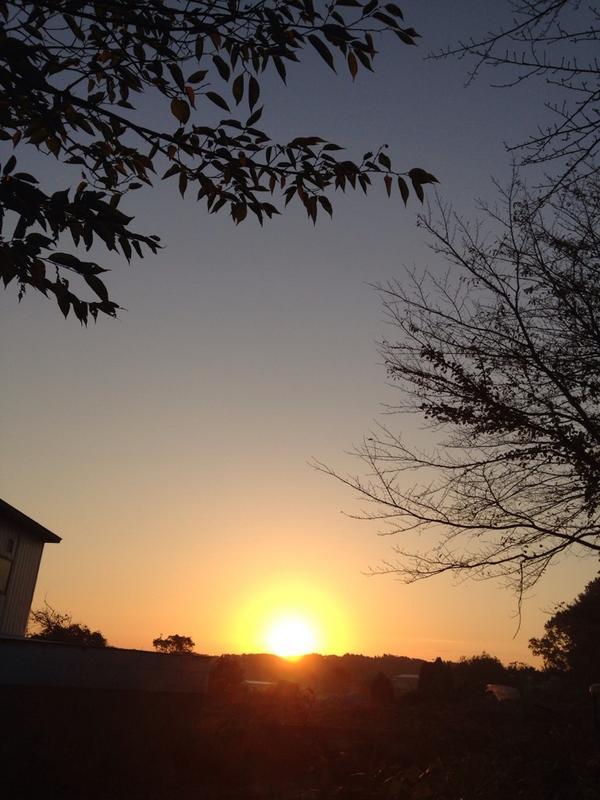 陽が出た http://t.co/F3w6p4WPVD