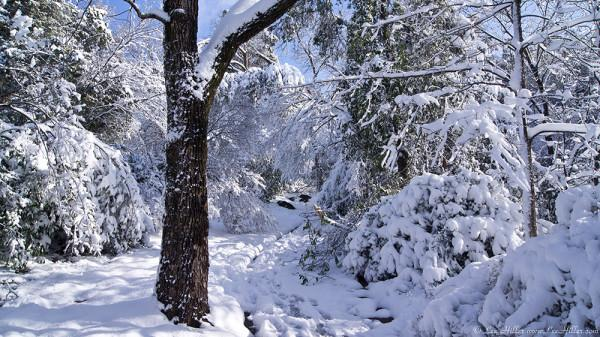 PhotoBlog: #HotSprings #NationalParks #Christmas 2012 #Ice #Snow #Storm https://t.co/wPxptOUFyf https://t.co/cBwcIQXa0i #Photography #Hiking