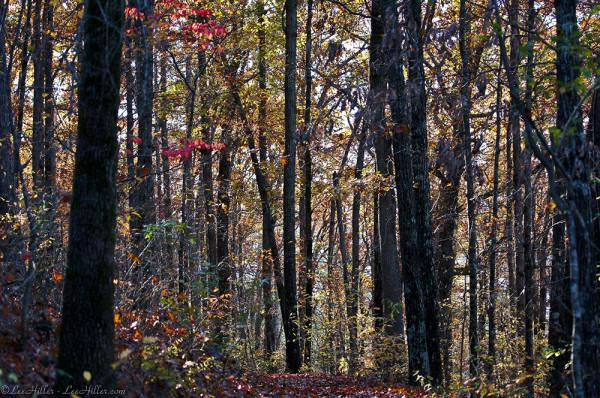 Last Glimmer of #Autumn on the #Trail   #Nature #Photography #Hiking #NationalParks