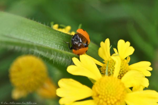 Mooned In June ;-)  #Nature #Photography #LadyBug #HikeOurPlanet