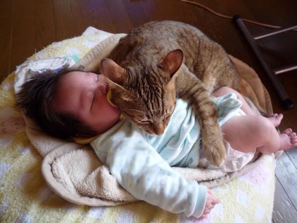 5年前の姪っ子大吉。別に赤子を温めてるわけではなく、暖をとってるだけという(笑) pic.twitter.com/4K3d8UwJqr