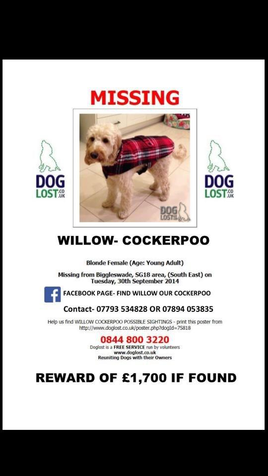 RT @debshartin: @NolanColeen pls rt help find this pup.Missing Biggleswade. £1800 reward. No questions asked. #findwillow http://t.co/OJVlU…
