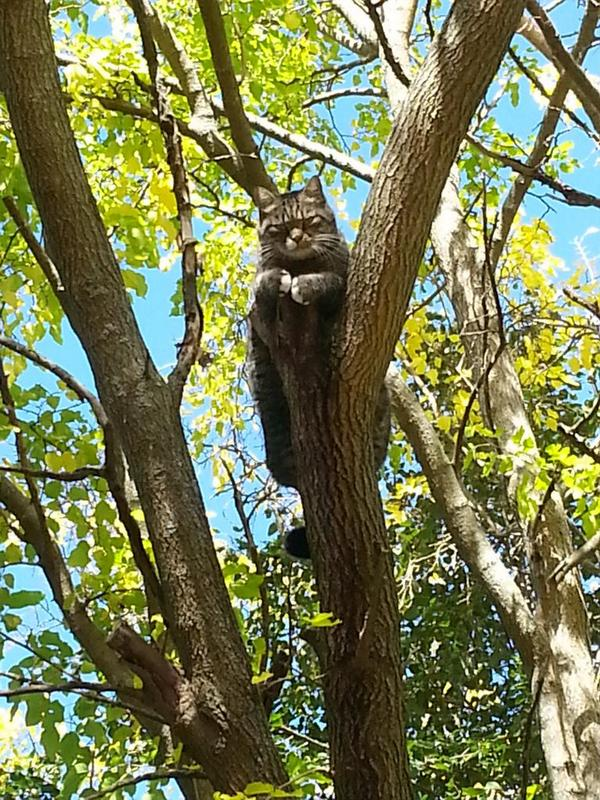 In Chestnut Hill getting ready to rescue this very serious looking cat out of a tree http://t.co/mrtIFwq2mD