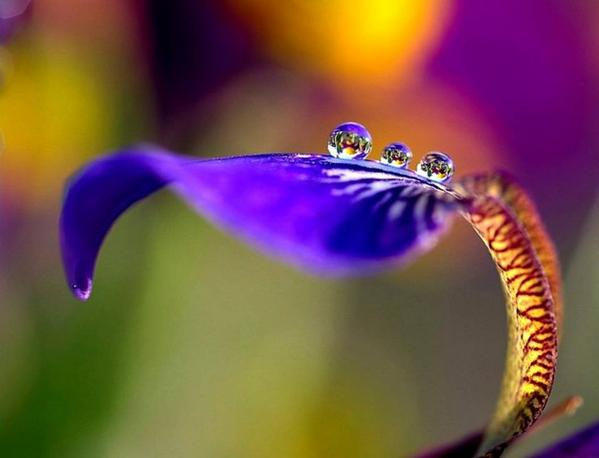 In the dew of little things the heart finds its morning and is refreshed.  - Kahlil Gibran http://t.co/eyGjzEcmZw