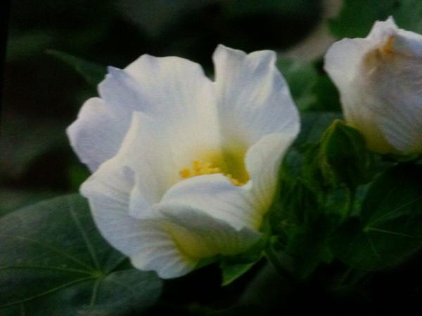 花は綺麗だけど…ちょっと恥ずかしい… http://t.co/xPwXv8dVi8