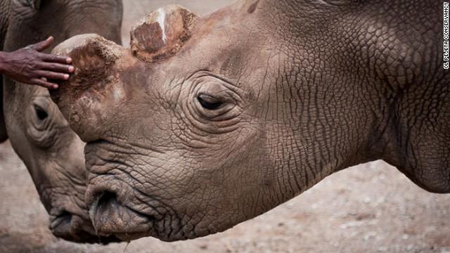 RT @CNN: Only 6 northern white rhinos are now left on Earth. http://t.co/5FBm4umuJU http://t.co/OjYwSVYT6q