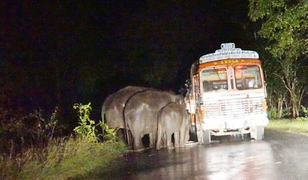 Sugar-carrying-truck breaks down near Sulthan Battery; elephants walks in and finish off two gunny bags of sugar. http://t.co/8SDipgzNFB