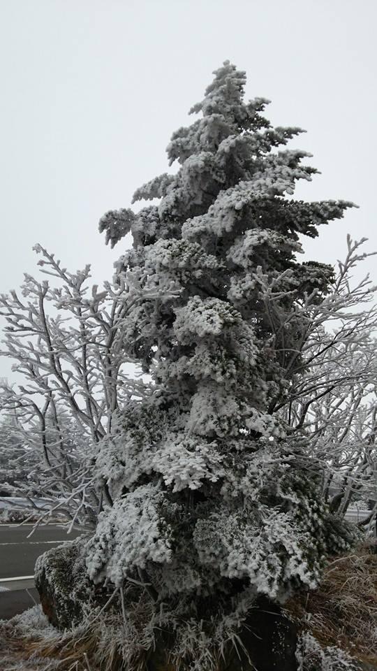 昨晩からの冷え込みにより、志賀高原渋峠は降雪となりました☃ 現在道路閉鎖はございませんが、路面凍結の恐れがありますのでチェーン等の準備をしたうえで安全運転でお出かけください。 #志賀高原 #道路情報 #志賀草津高原ルート #渋峠 #雪 http://t.co/HY6MfFDzqi