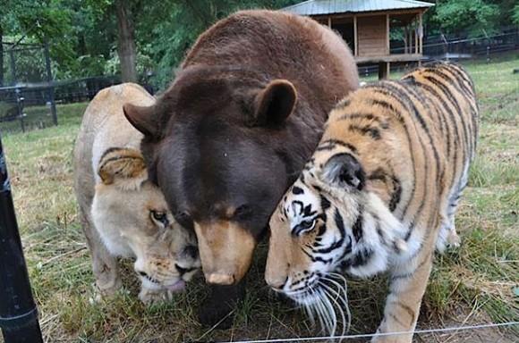 カラパイア : 心を溶かす。15組の異種動物たちに芽生えた友情をとらえた素晴らしい写真 karapaia.livedoor.biz/archives/52175… pic.twitter.com/au4x7Pyjca