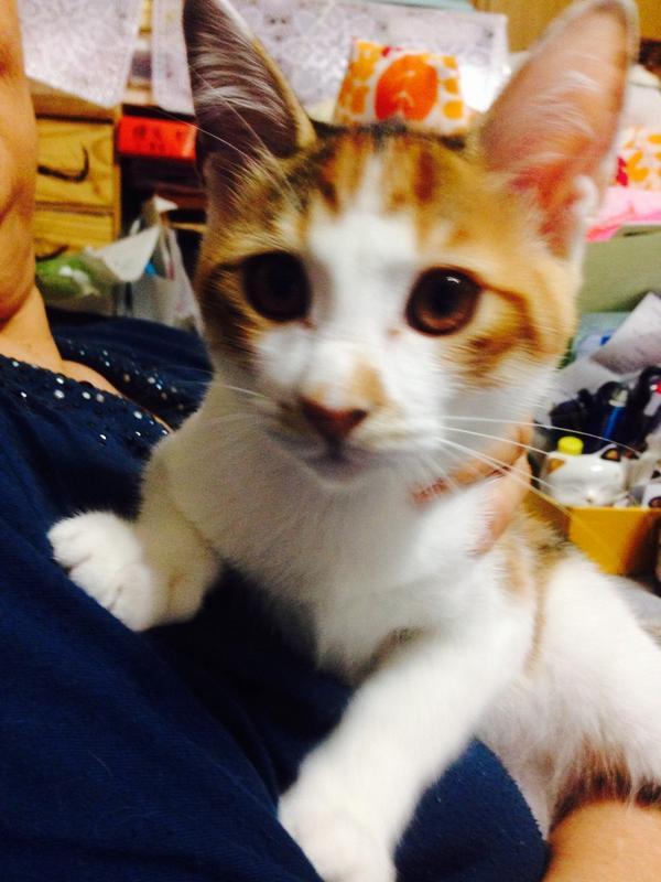 【拡散希望】 先々週家の前に仔猫が三匹捨てられていました。埼玉近郊にお住まいの方で引き取り先を探しております。 三毛猫♀灰白♂灰キジ白♂ 生後三週間程度、完全室内飼いと避妊・去勢手術をお約束できる方お願いします。リプにてご連絡下さい。 http://t.co/goXxJLTbq6