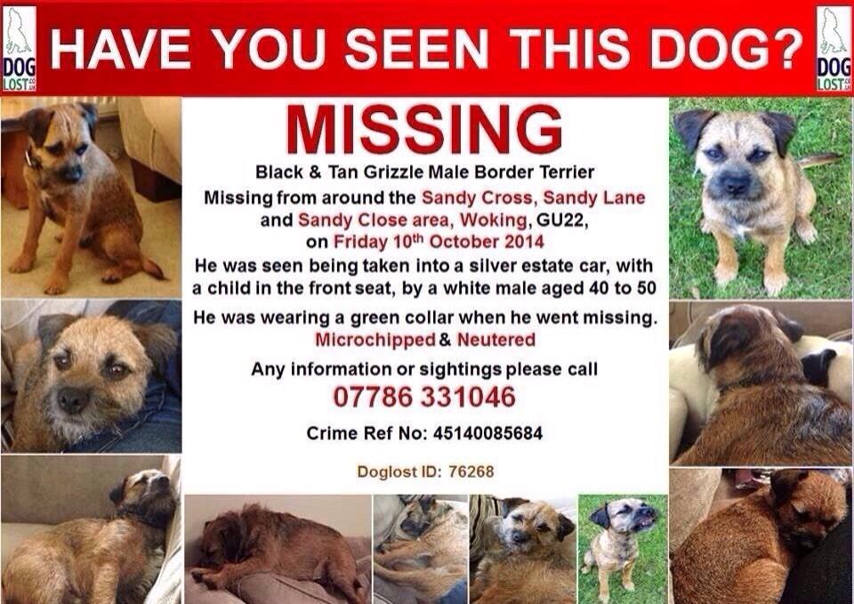 RT @isabellerfox: @lemontwittor @StephenMulhern pretty please could you RT to help find stolen dog @FindTobyTerrier #findtobyterrier http:/…