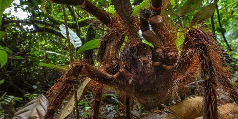NOPE! Behold The Terrible Horror Of A South American Spider The Size Of A Puppy http://t.co/eyTY4MXEzk http://t.co/lWyGEewIhr
