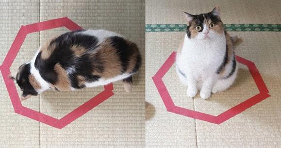 カラパイア : コードかテープがあればよい。驚くほど猫がホイホイする、猫転送装置の作り方がブレイク中 http://t.co/OFnXs3abf9 http://t.co/Rh1yv3ZUnt