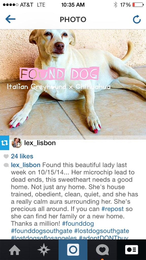 LA! Let's find this doggy's owners. http://t.co/7i9pK3jUMS