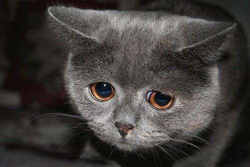 Trying to delegate task to another developer by sending pictures of sad cats... http://t.co/n3qcNTPtX1