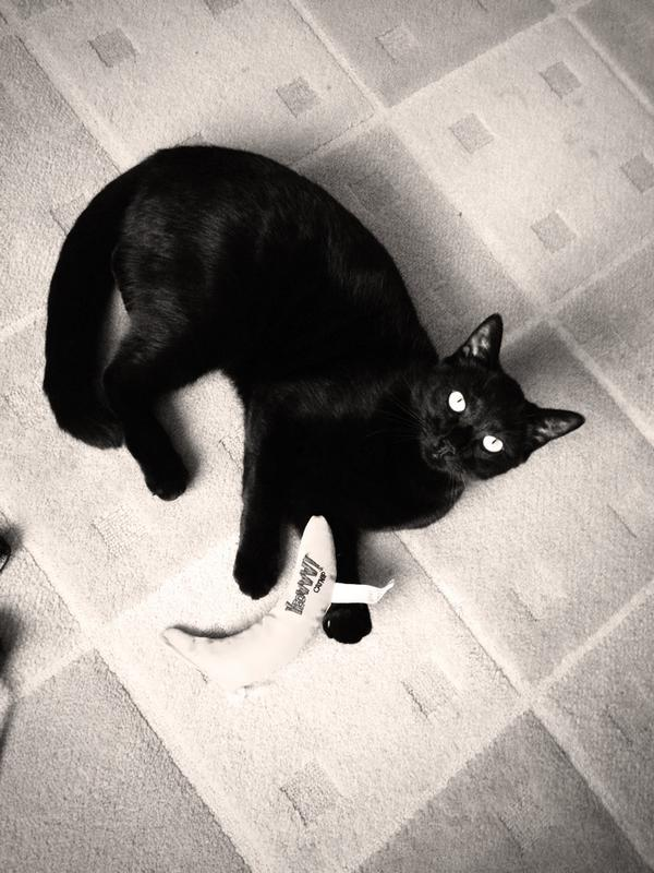 @CatsProtection #CPBlackCats one of my beautiful boys 💛 http://t.co/r5Qp95QVlc