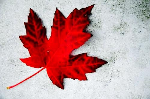 Today we are #CANADA.STRONG #HeadsUp #Together http://t.co/IIoLCPTVZp