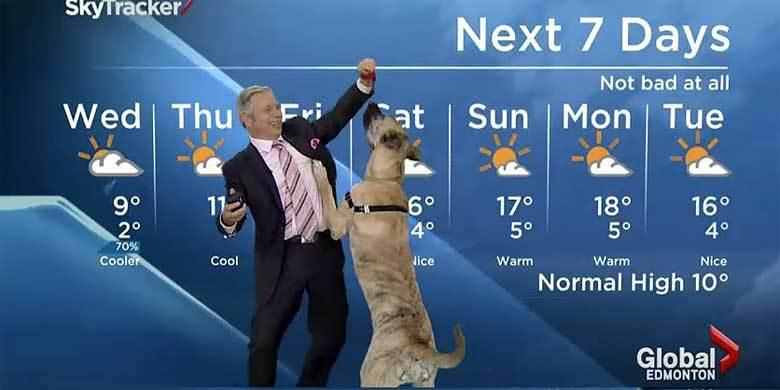 Dog Steals The Show On This Live Weather Forecast http://t.co/PetIZS518H http://t.co/rCIQntRBCz