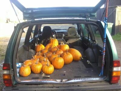 Getting stocked up on tasty pumpkins from @sandylanefarm for the Oxford Pumpkin festival next week! #pumpkinrescue http://t.co/VPXuhxZiGp