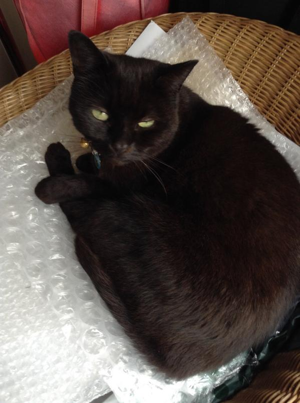 Love this bubble wrap 😄 #CPBlackCats http://t.co/ckdKoCUUiZ