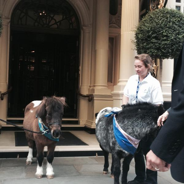 VIP guests arriving @TheConnaught today for @TatlerUK lunch #hermes #horsewelfare http://t.co/ip0SFgiyVM