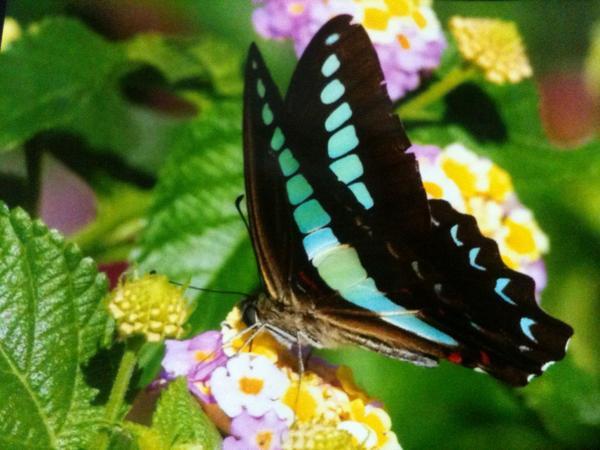 @kamakurasama  こんばんはm(._.)m…フォロー有難う御座います。最近はトンボとセミ、蝶等撮ってます。宜しく〜 http://t.co/B6l51DQ7pf