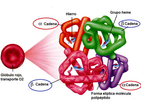 Uživatel Claudia Solar Na Twitteru Bio2csi La Hemoglobina
